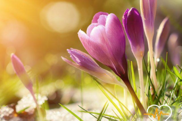 Frühlingserwachen – das Kribbeln im Bauch