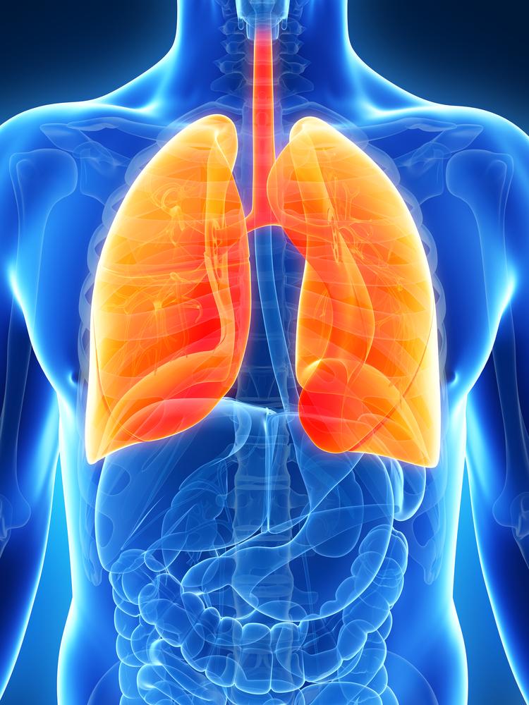 Lunge und Atmung, eines der Wunder des Lebens